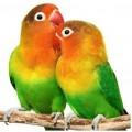 Πτηνα